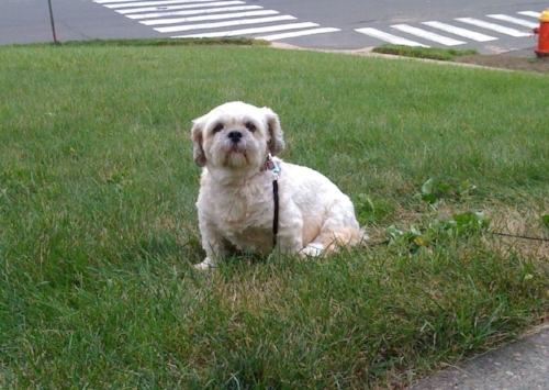 Kaleigh at home in Connecticut. Photo provided by Matthew Dicks.