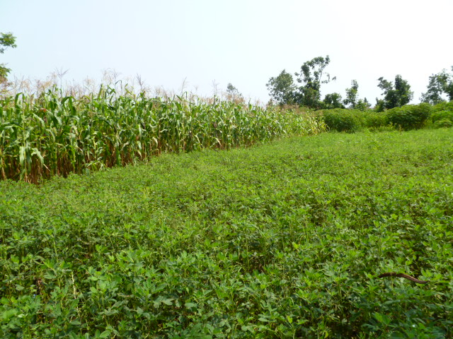 Fields after Sasa Harambee training.
