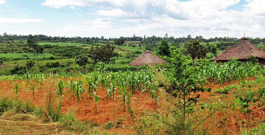 Typical farm before Sasa Harambee-designed training.