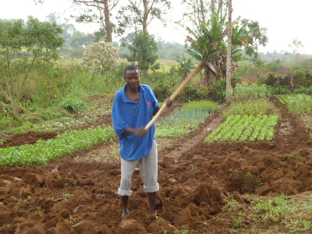 Irrigation Plot