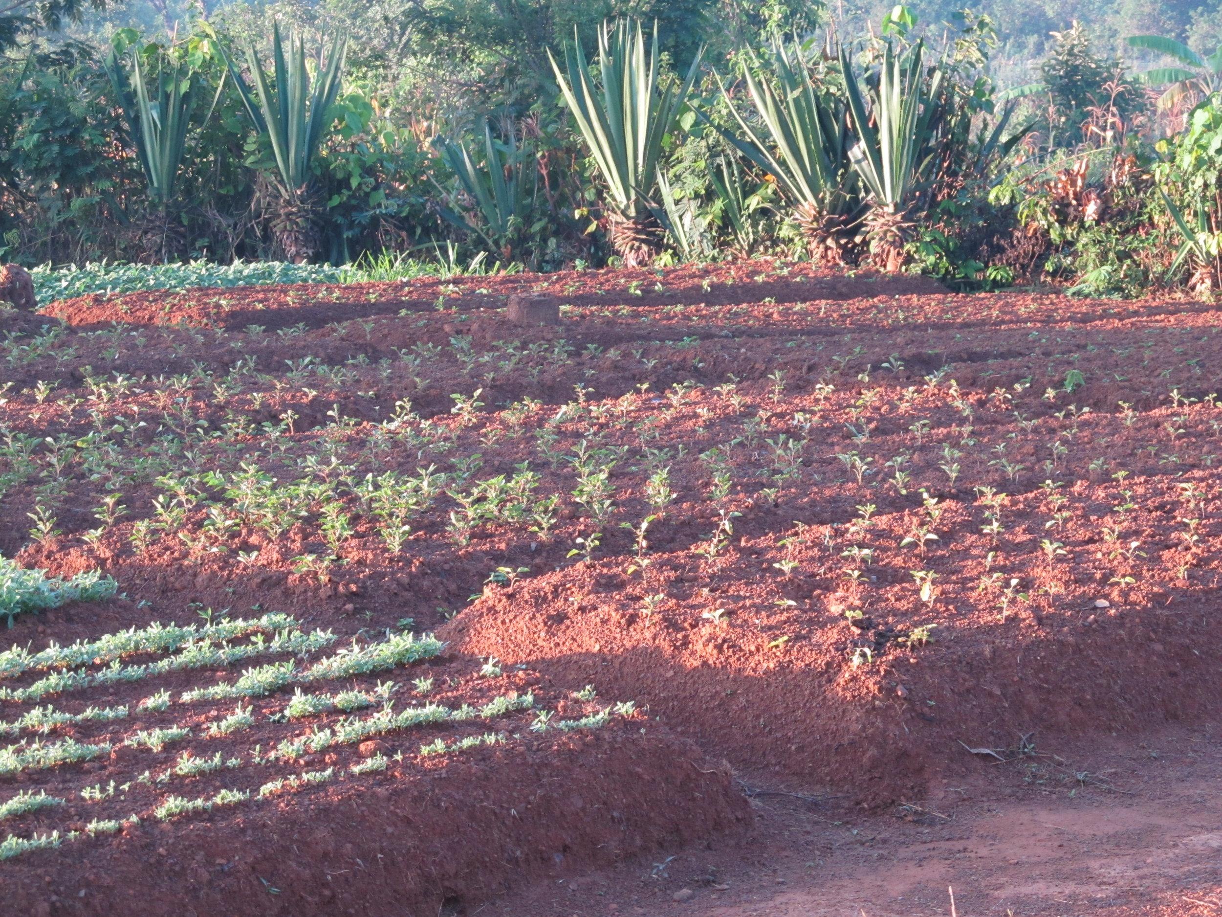 Varied raised bed farming