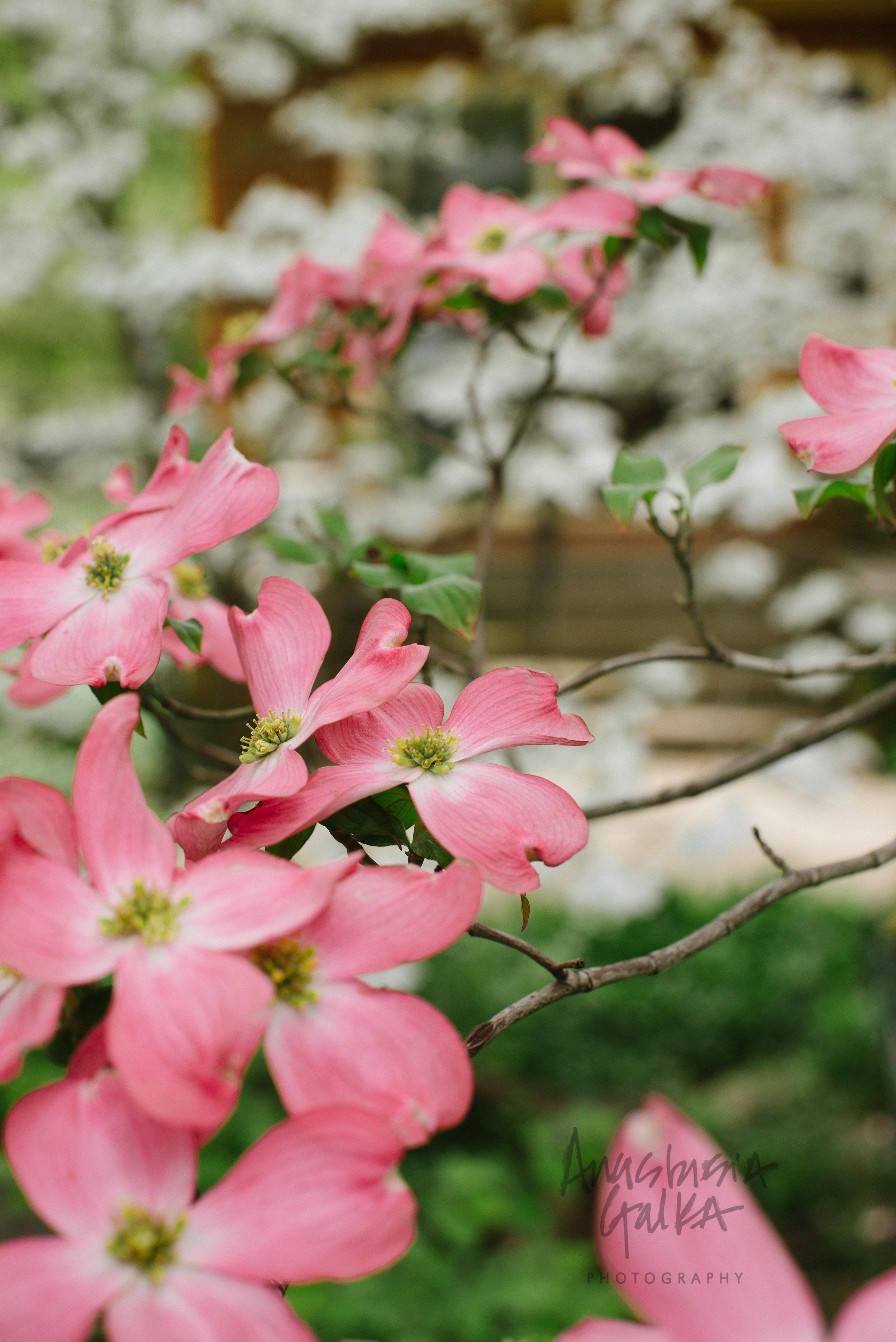 Nature (7 of 11).jpg
