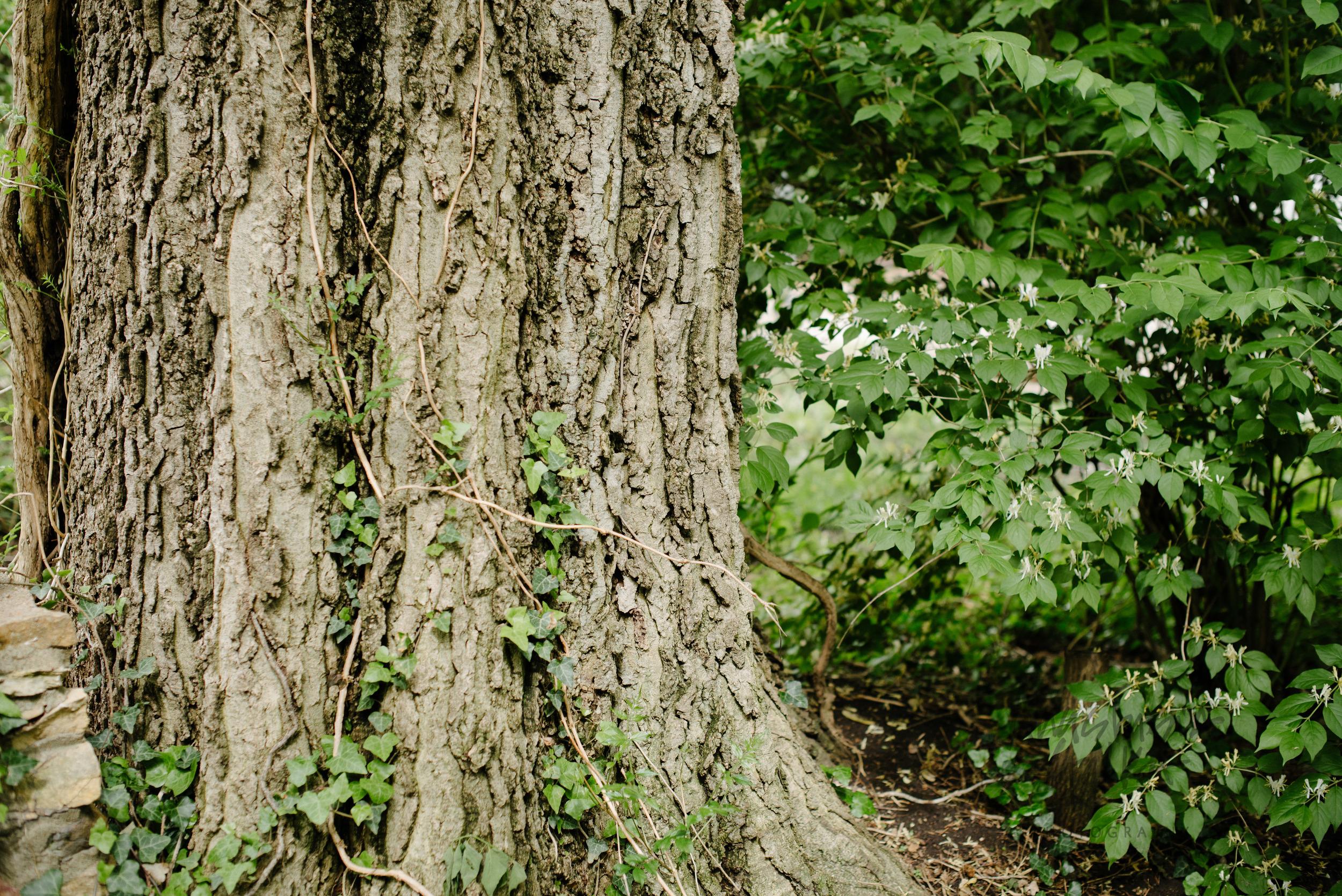 Nature (9 of 11).jpg