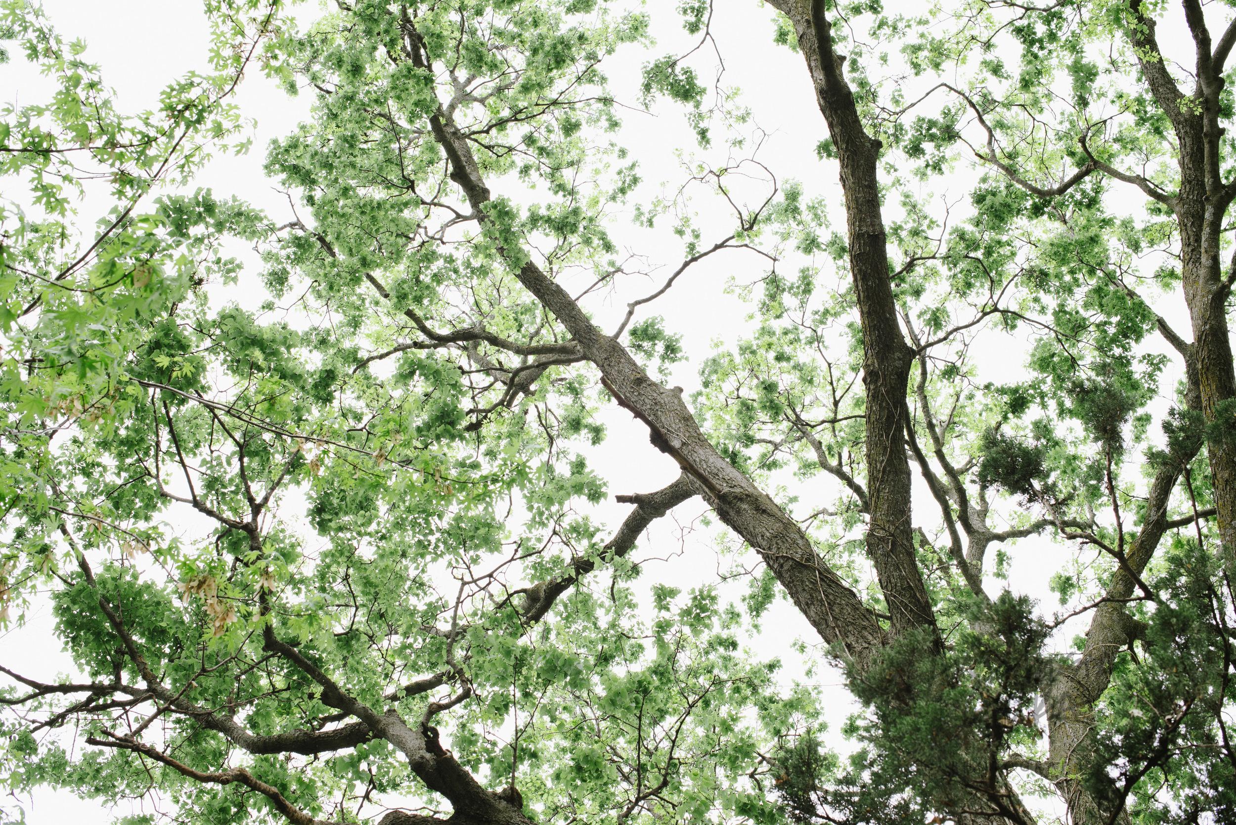 Nature (10 of 11).jpg