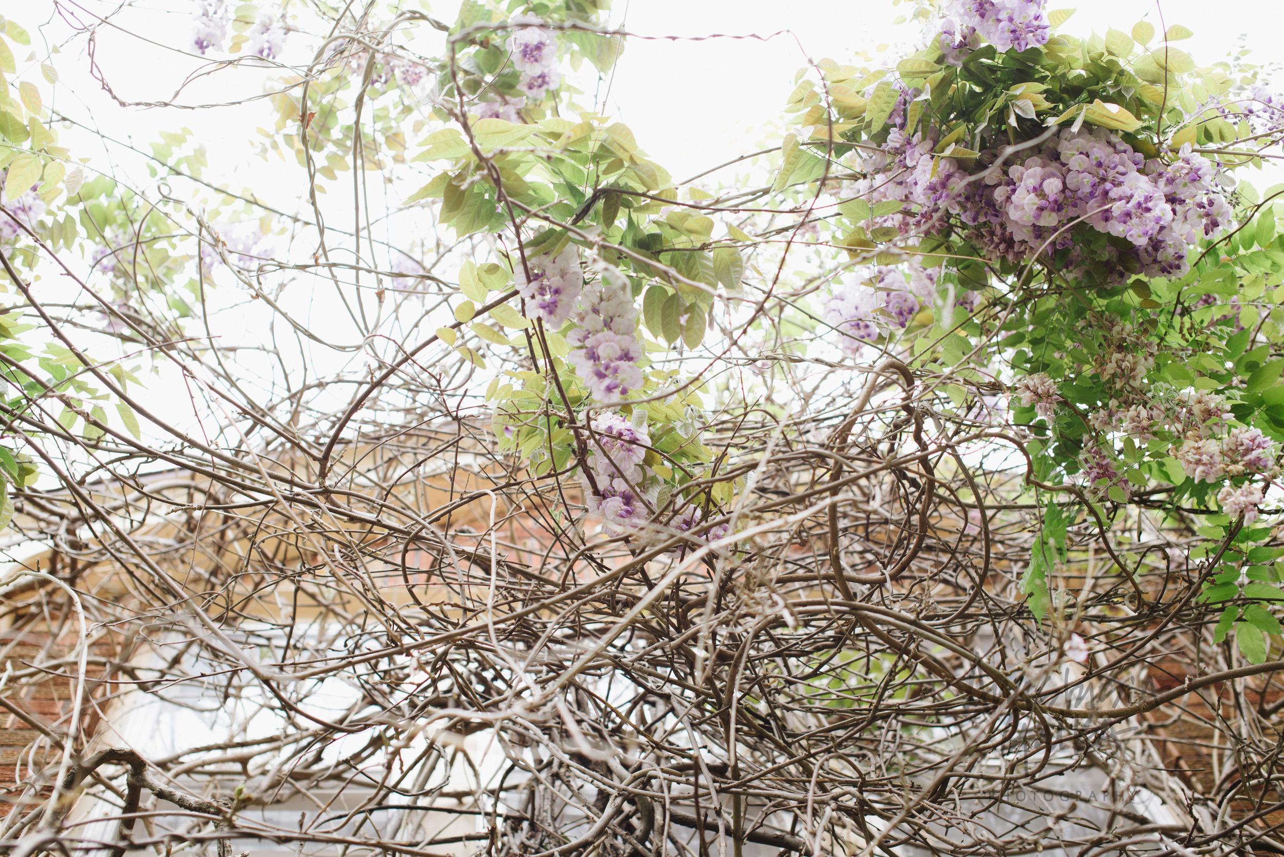 Nature (11 of 11).jpg