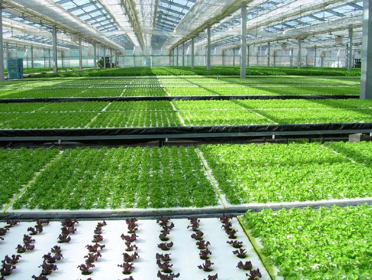 hydroponics.jpeg