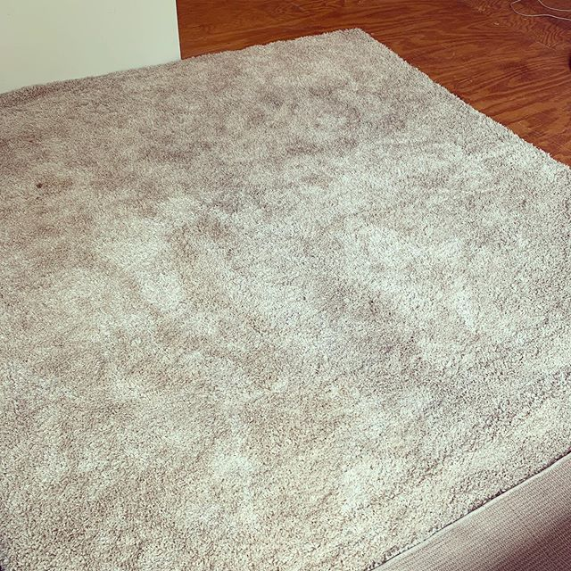 Huge Shag rug, great condition! 9' x 12'. $75.  Must pick up soon.