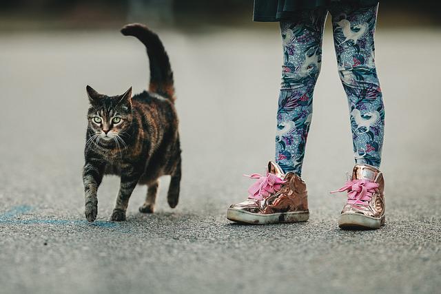 hello-olivia-photography-long-island-photographer-children-family-portraits-pets-cats-kitty1.jpg