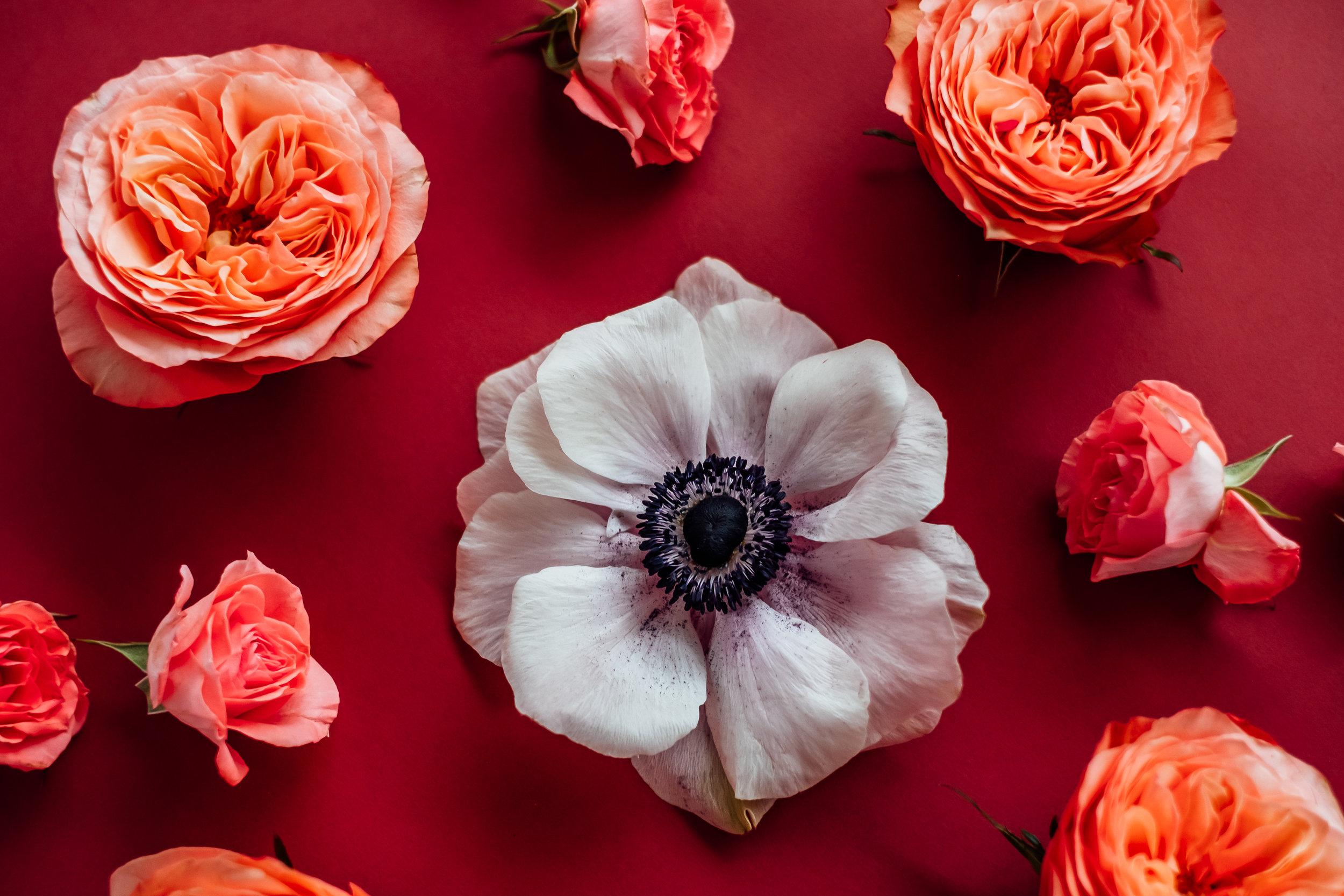 Ann Cox Design with  Florist Fire , Image via  Ashlee Hamon Photography