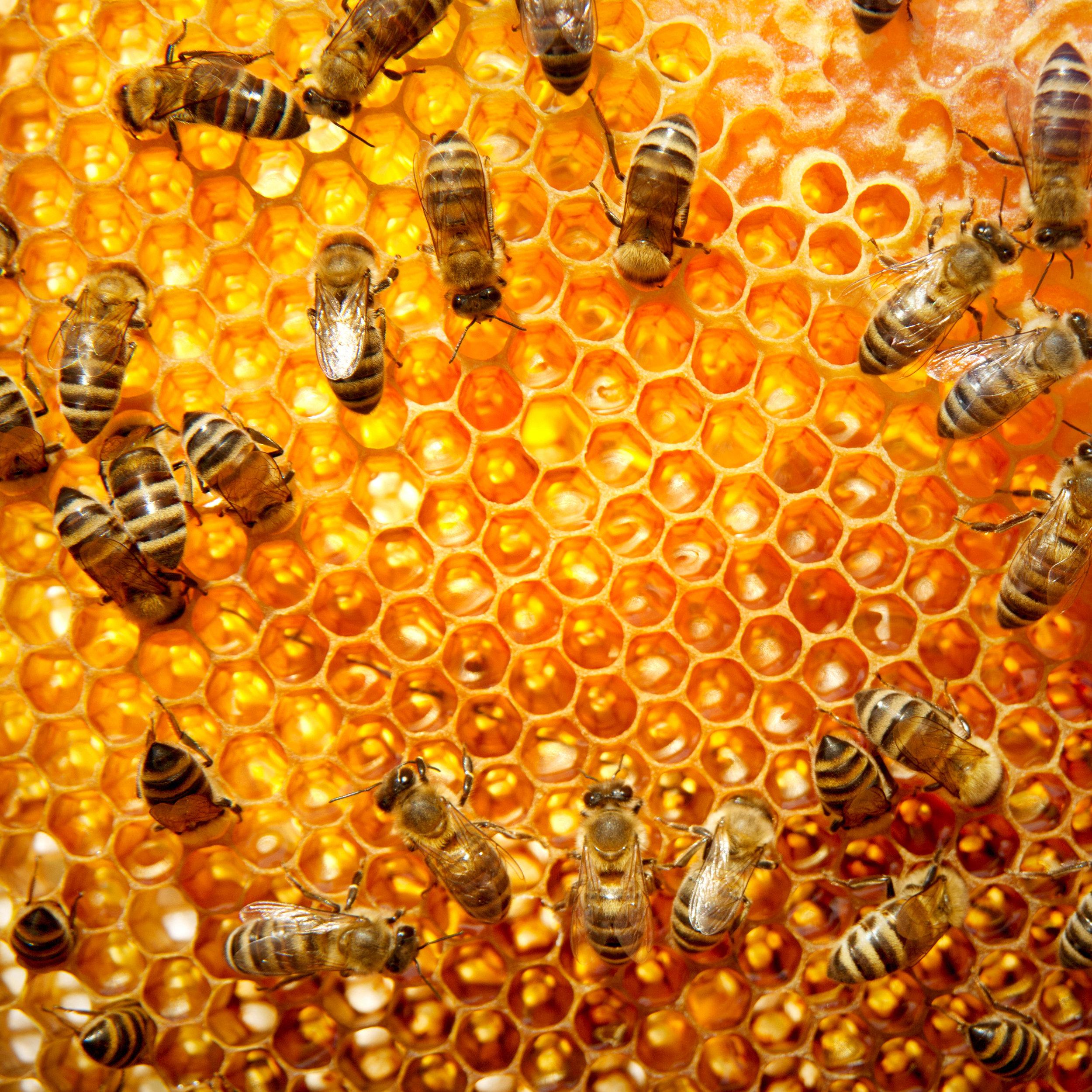 Honeycomb4.jpg