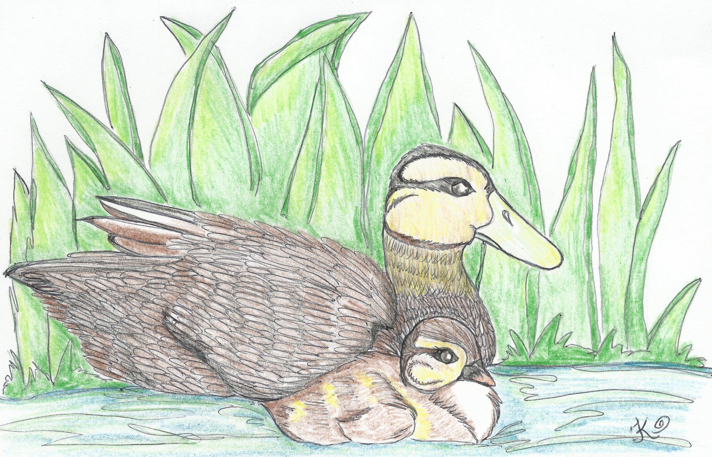 Mama Duck / TinaKayArt.com