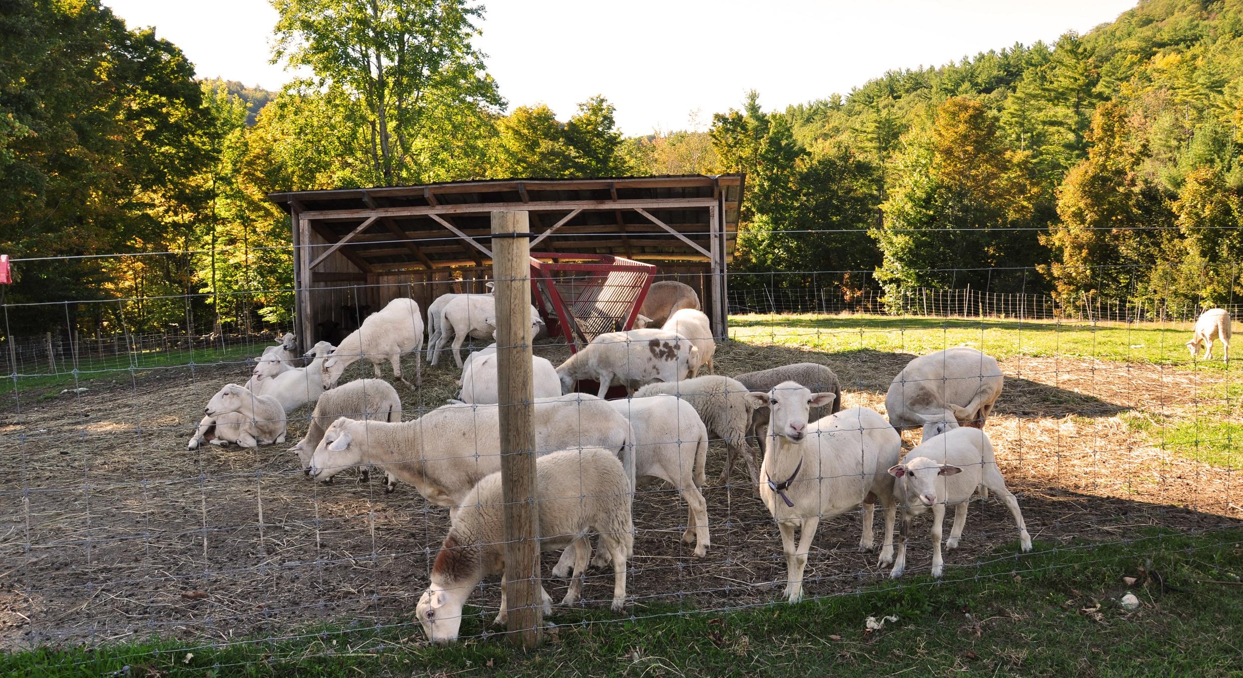 farm23 100.JPG