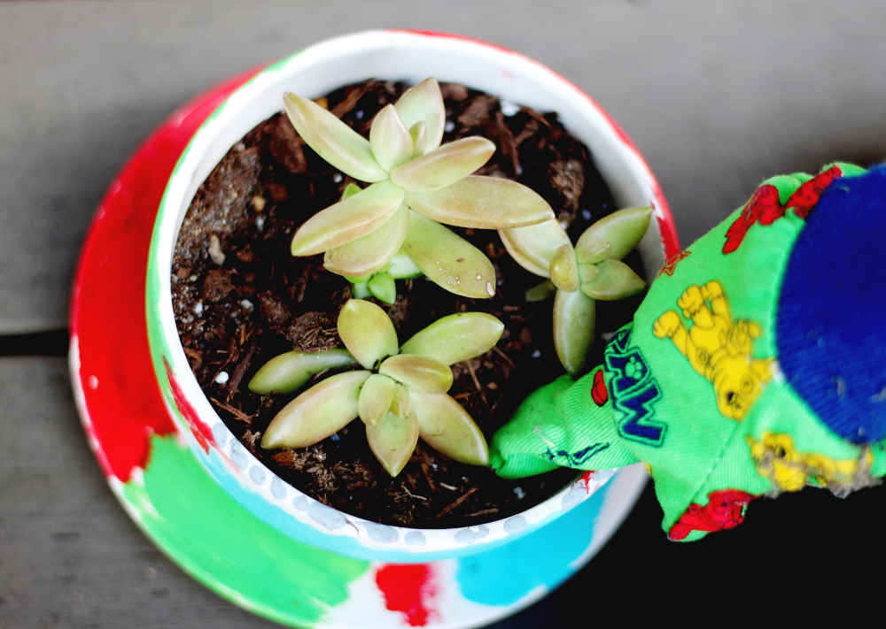 Tea Cup Succulent Planters — All Kids Are Gifted