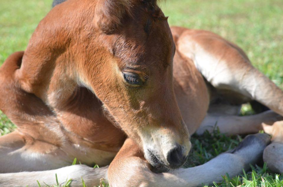 New foal bay closeup 2.jpg