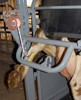 The rear leg lifter is operated independently from the rear gate for extra stability. The rear gate is also adjustable for a wide range of animal sizes.