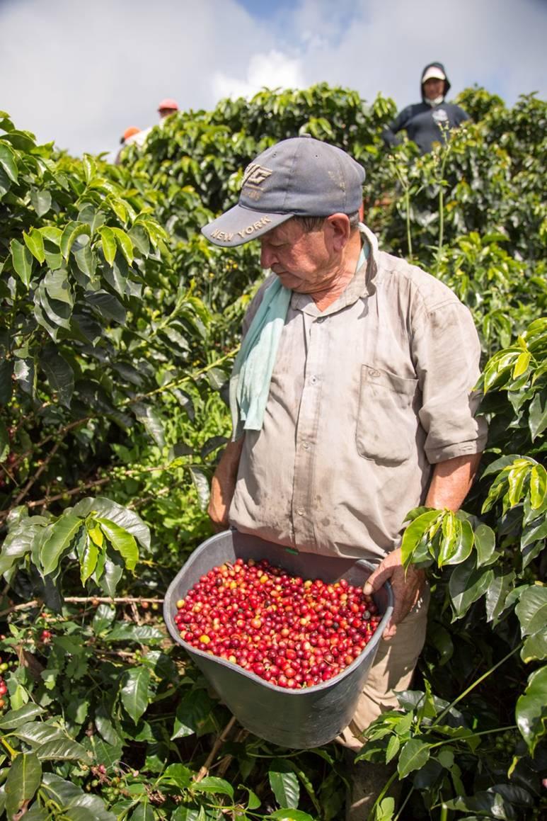 La Joyeria harvest2.jpg