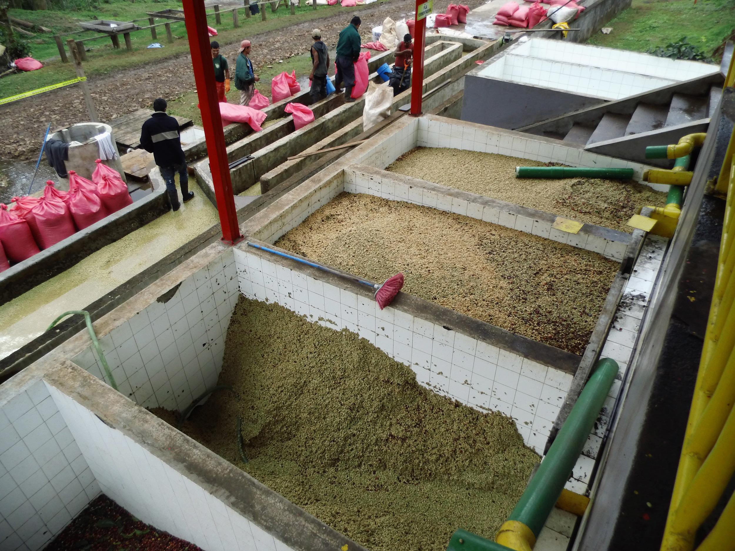 Fermentation tanks Paraiso.jpg
