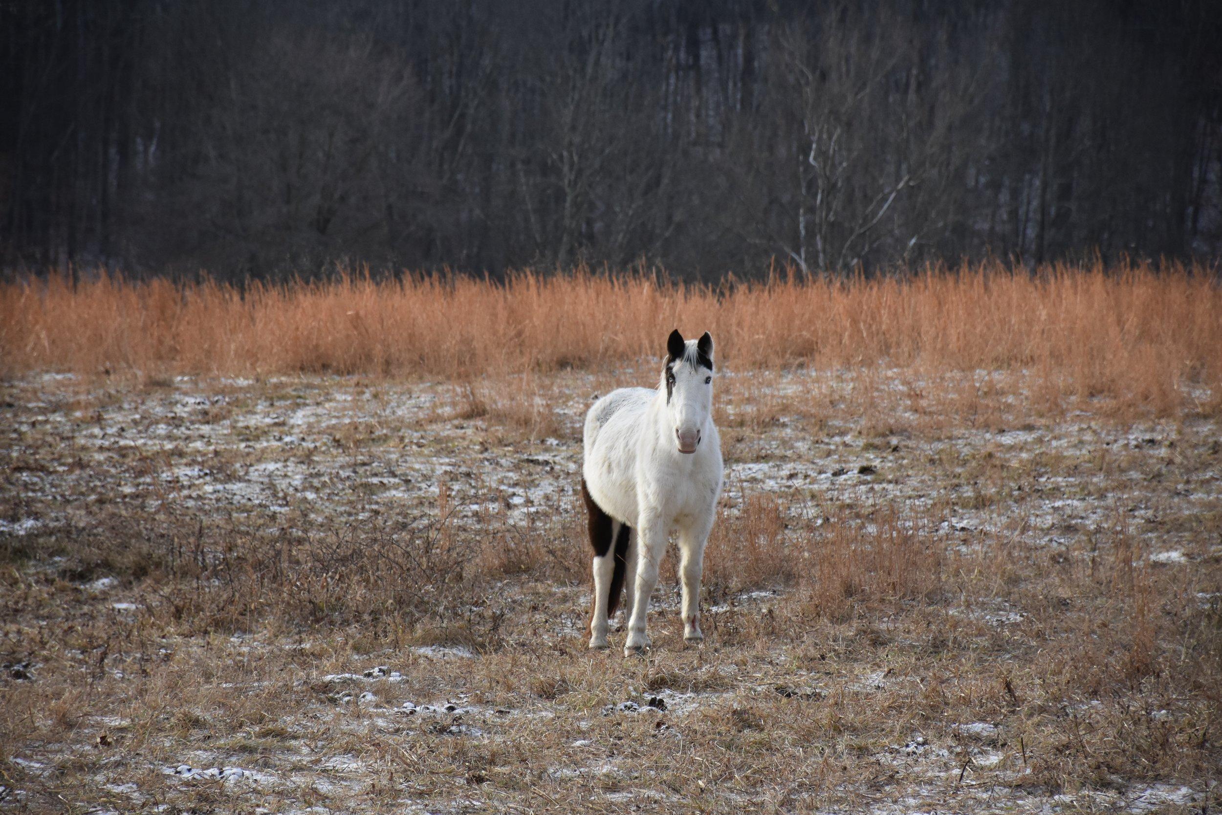 Horse, December 2015.