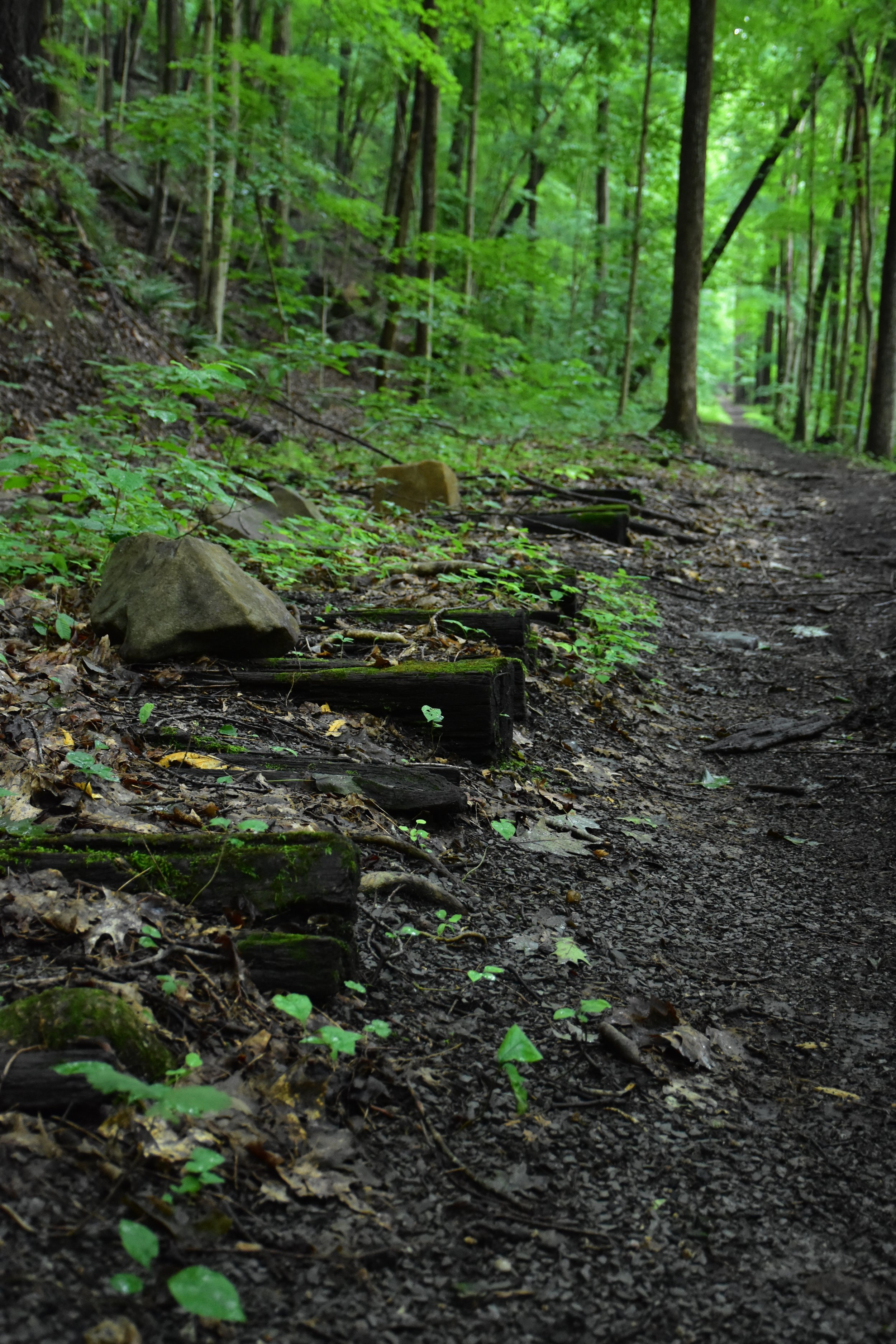 Old railroad train tracks on the Brooklyn to Southside Junction Trail, July 2015.