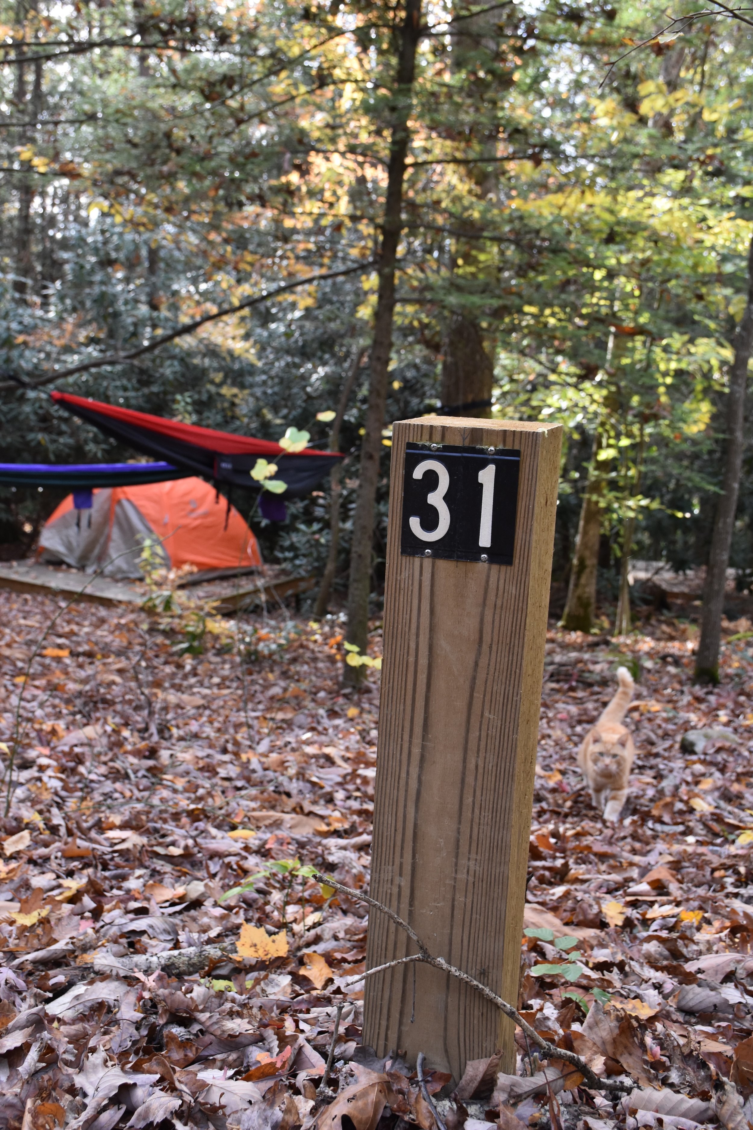American Alpine Club campground - our site from October 2015.