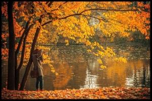 fall leaves irena miller
