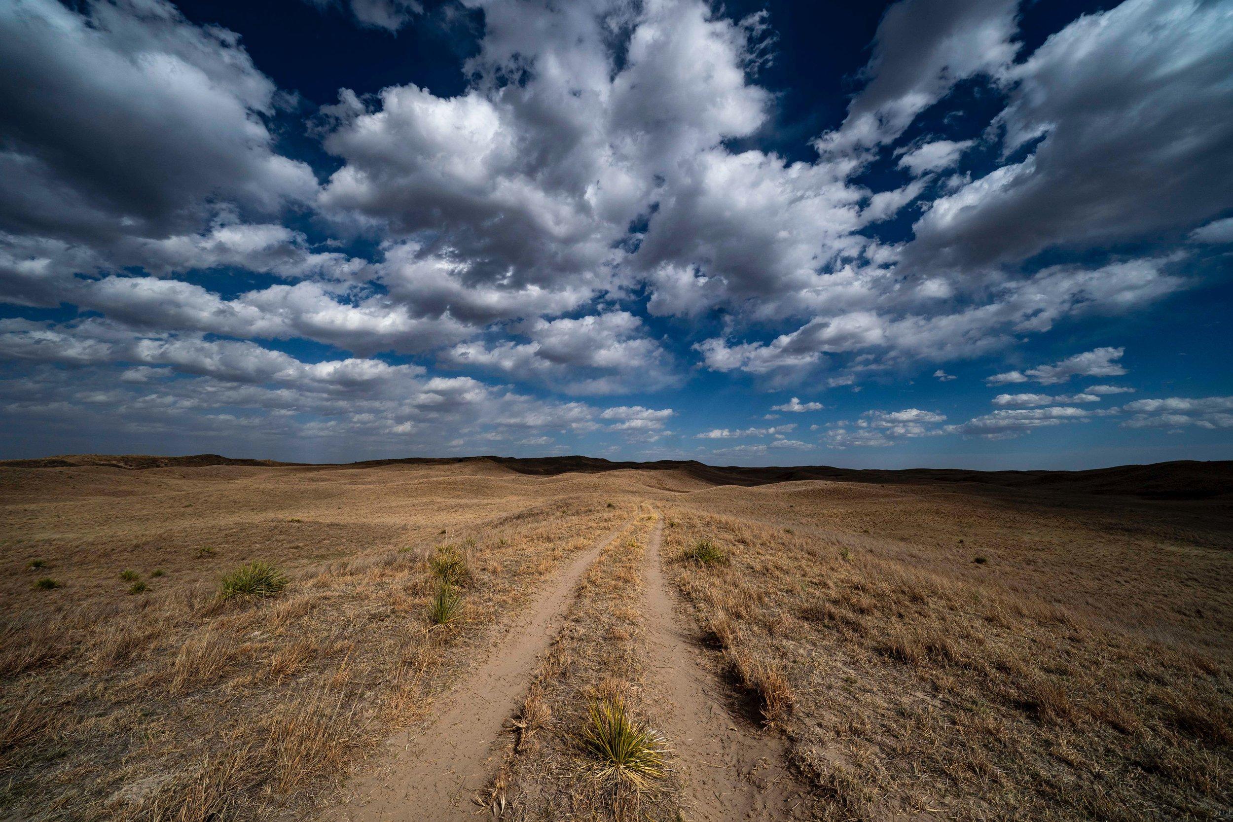 Nebraska National Forest near Halsey
