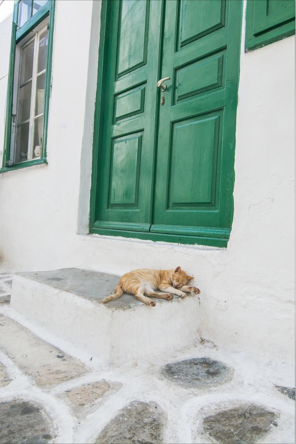 Mykonos Cat.png