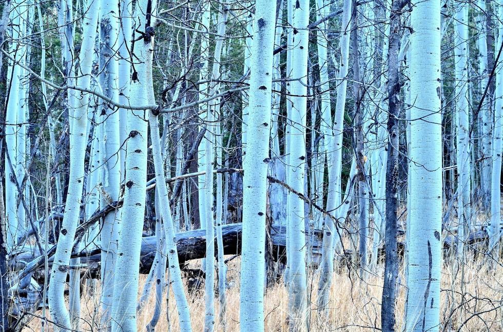 aspen forest hike.jpg