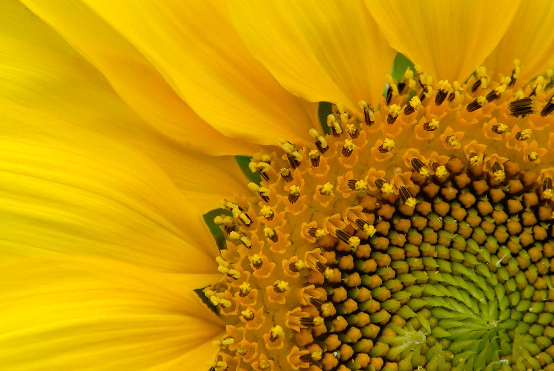 Yellow Fantasia