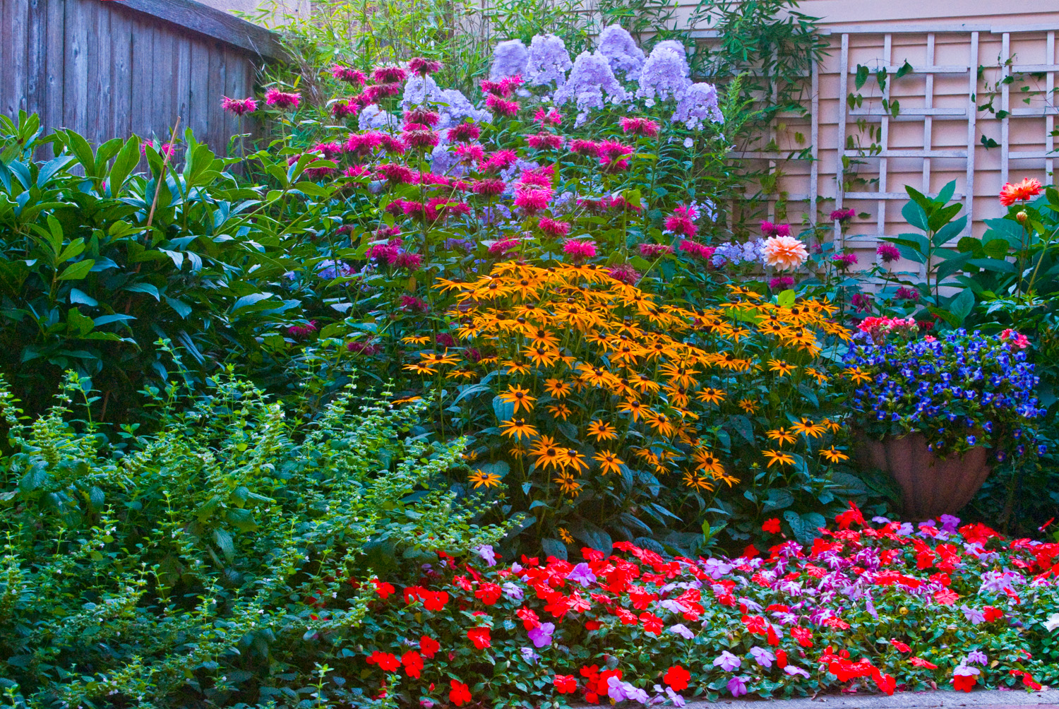 A Summer in Bloom