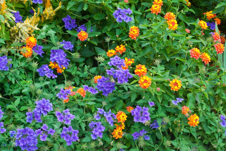 Fragrance in the Garden