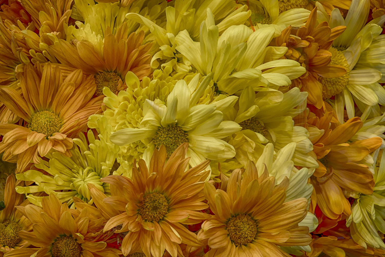 Yellow Daisy Bouquet