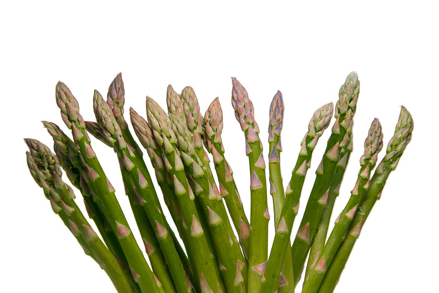 Crowds of Asparagus