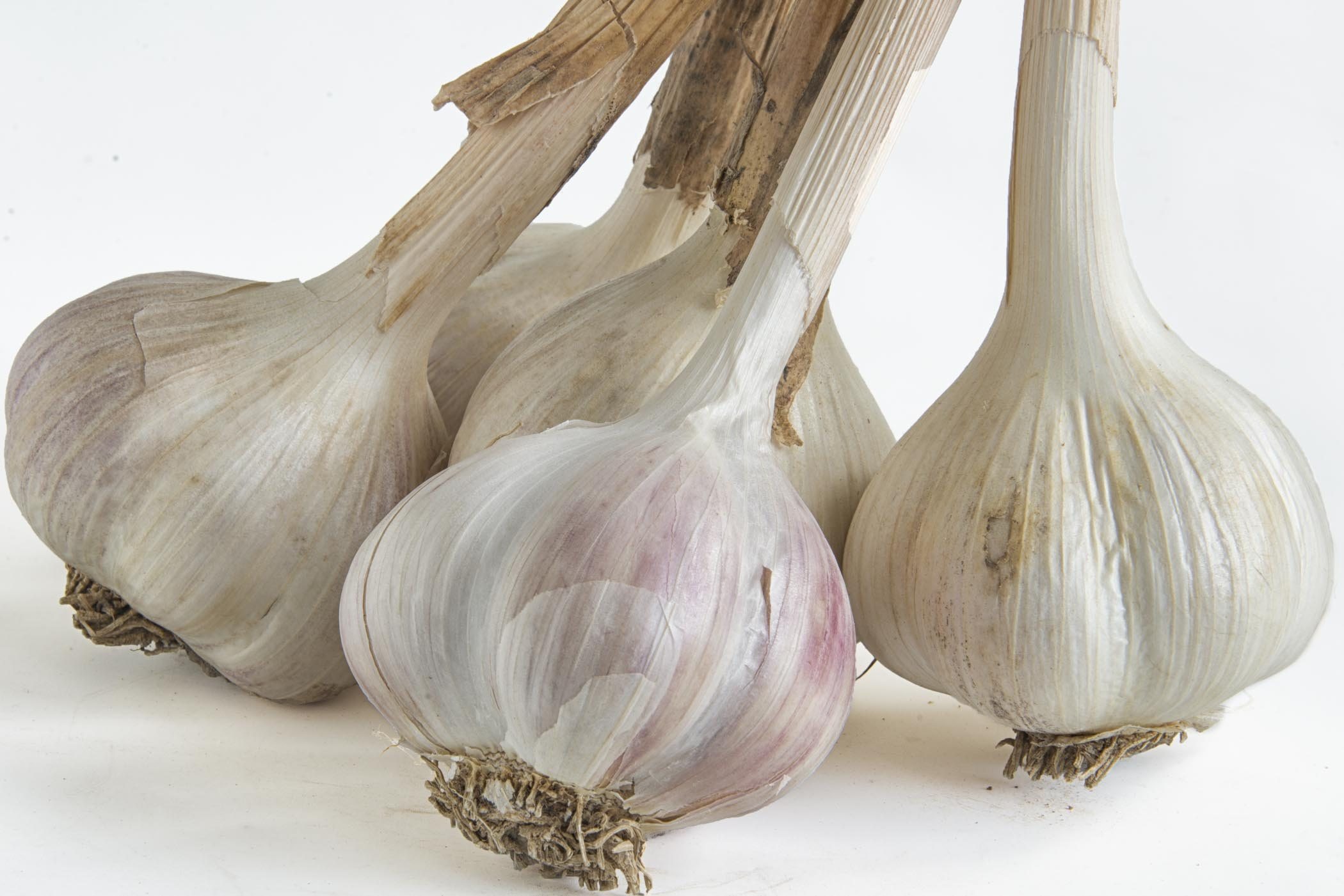 Garlic Stalks.jpg