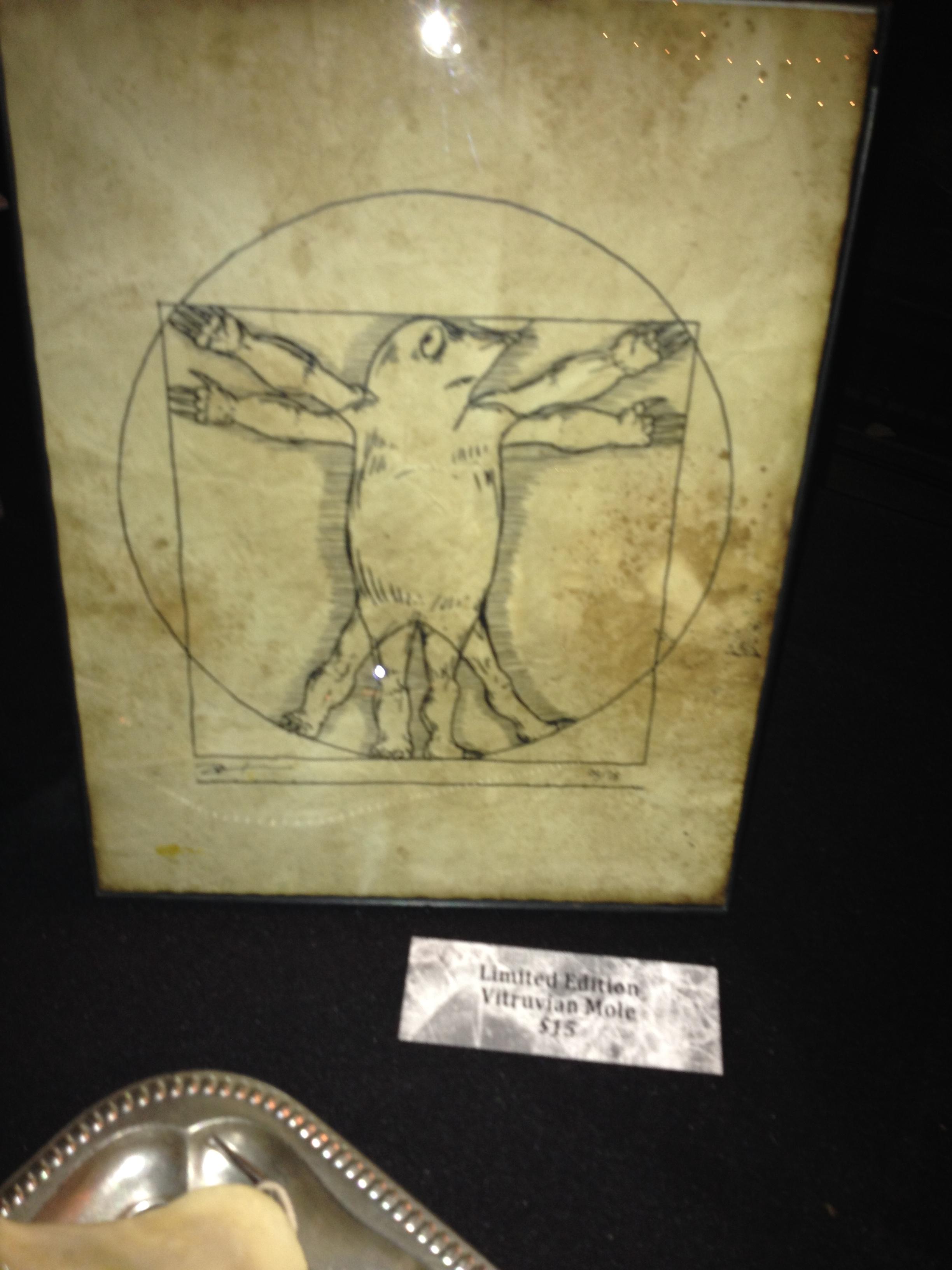 The Vitruvian Mole