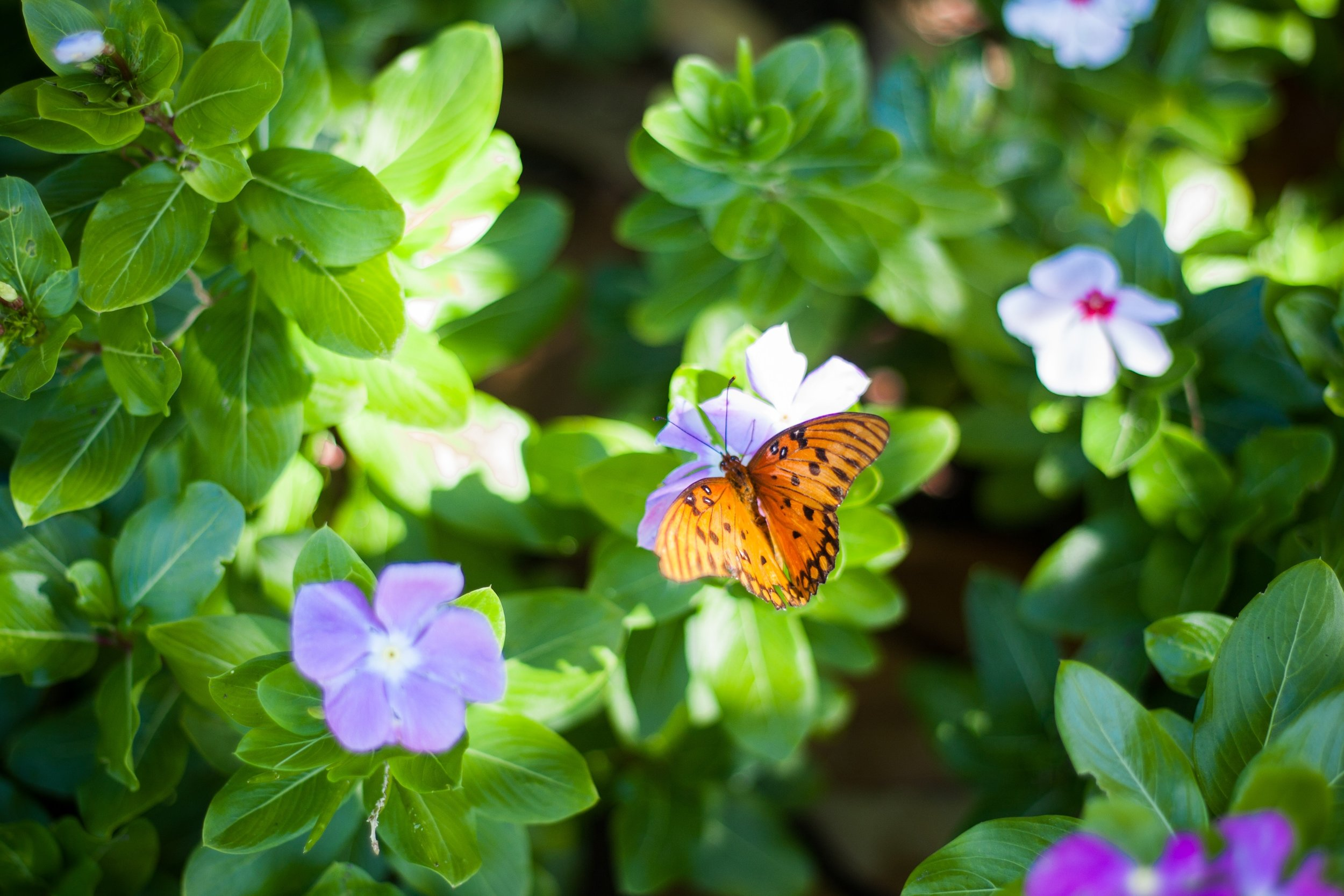 Spring Energy Clearing Butterfly.jpg