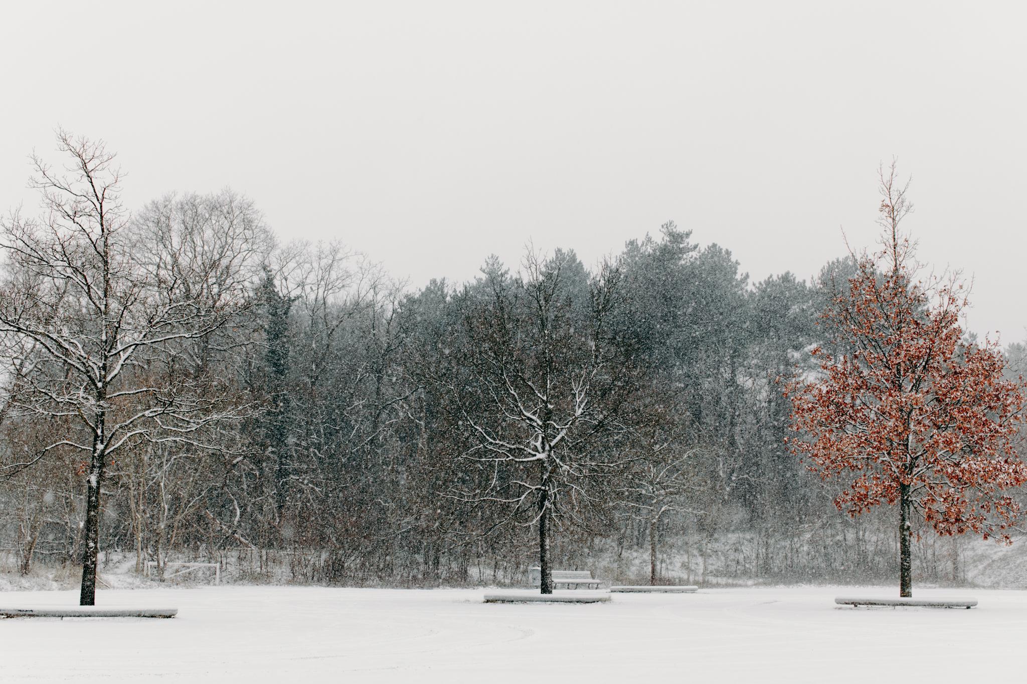 005-winter-sneeuw-oosterplas-bloemendaal.jpg