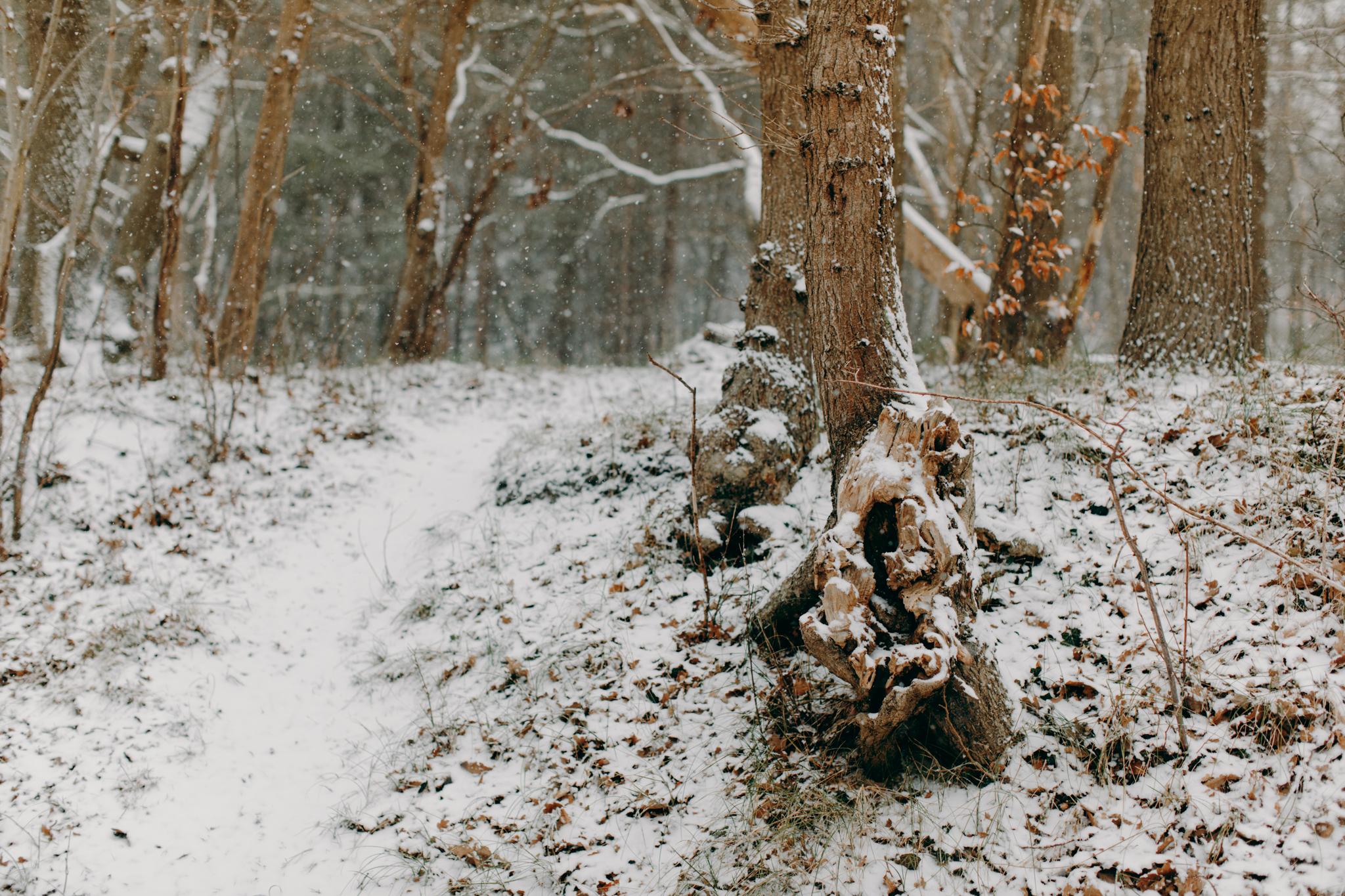 008-winter-sneeuw-oosterplas-bloemendaal.jpg
