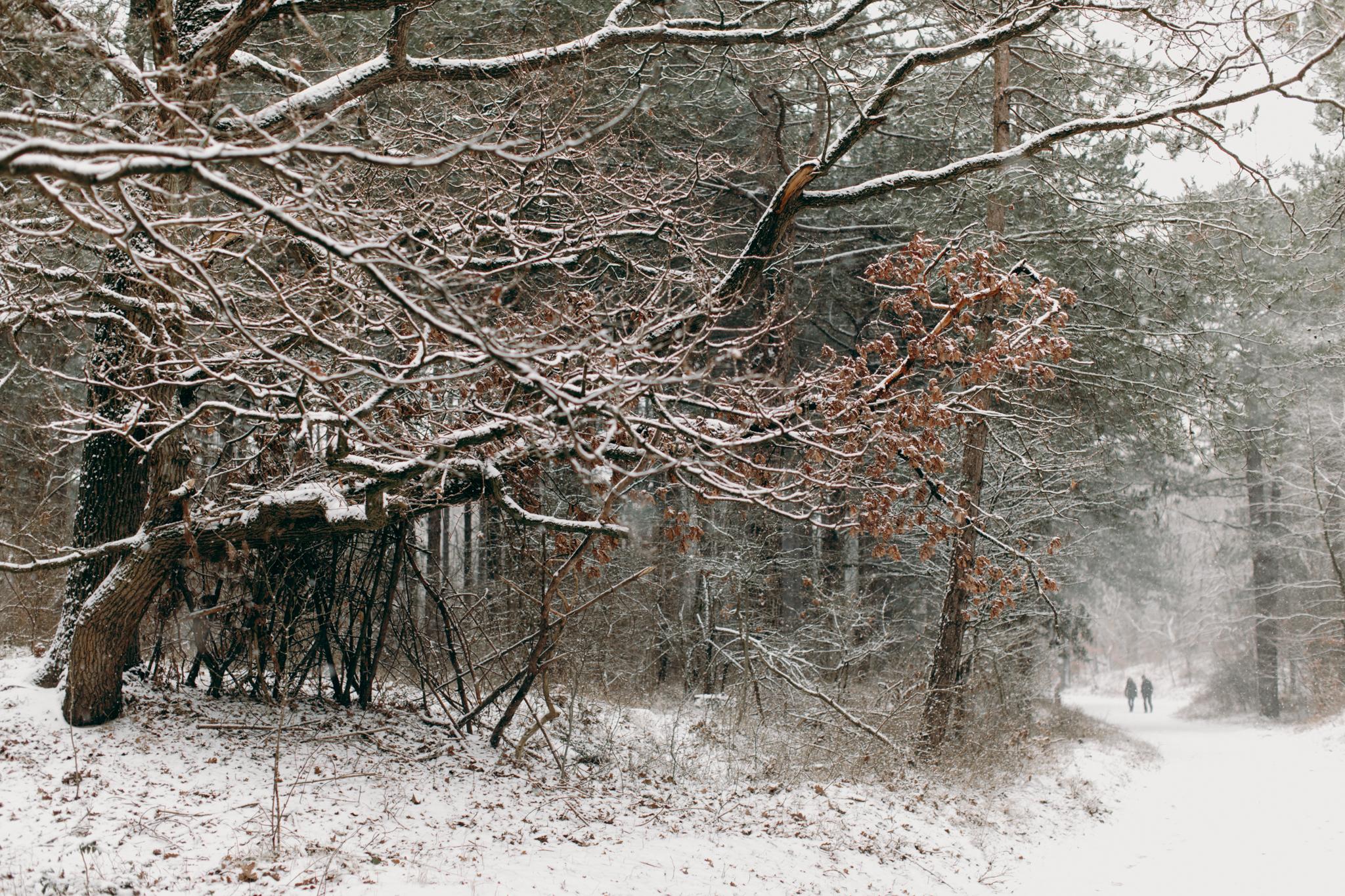 033-winter-sneeuw-oosterplas-bloemendaal.jpg
