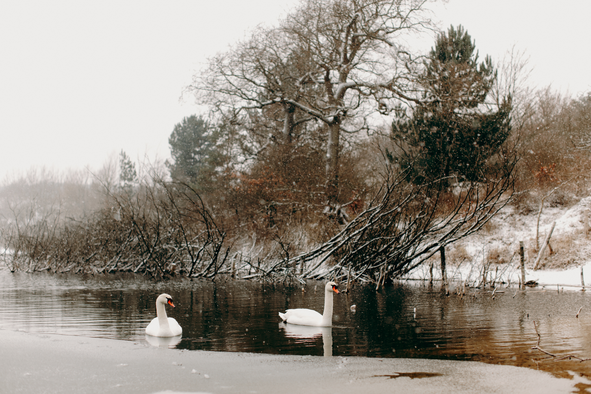 040-winter-sneeuw-oosterplas-bloemendaal.jpg