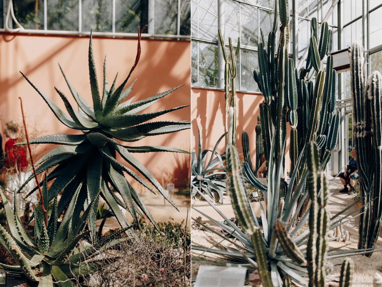 Cactus at Hortus Botanicus Amsterdam