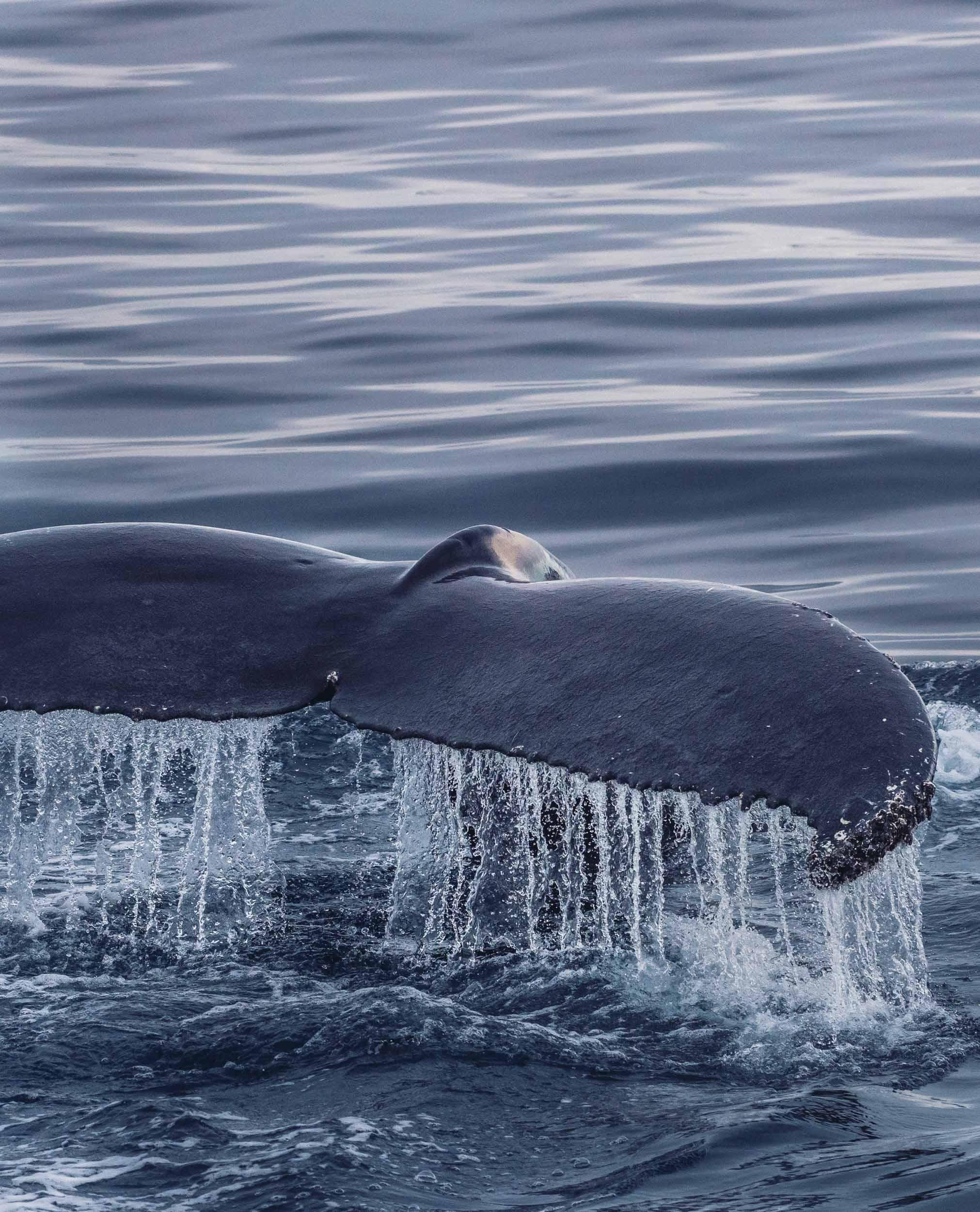 Antarctica-18.jpg
