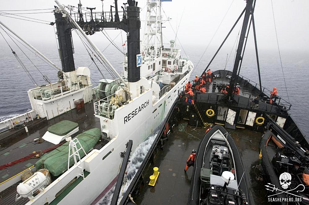Sea Shepherd confronts the Japanese ship Kaiko Maru