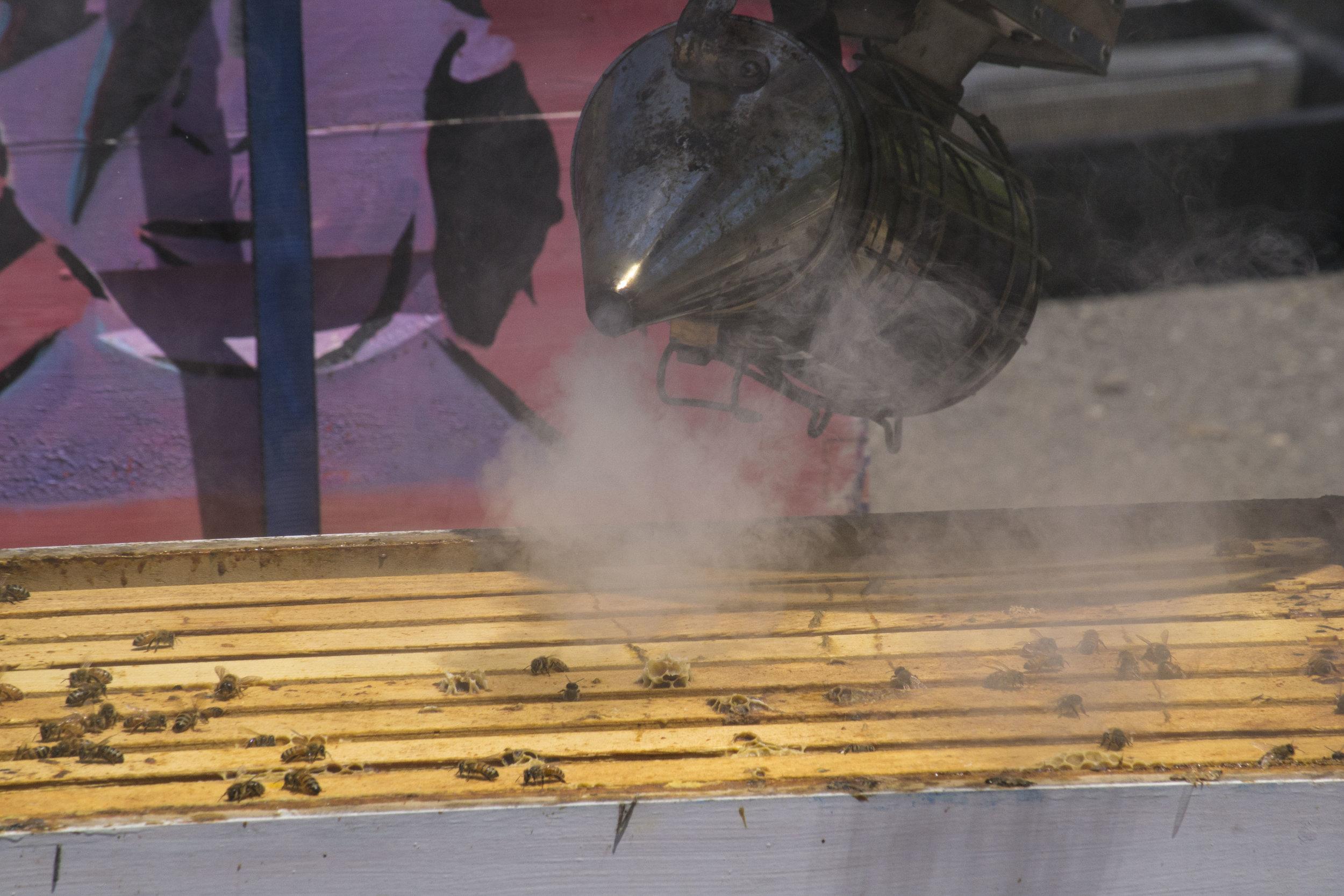 beekeeper1_32.jpg