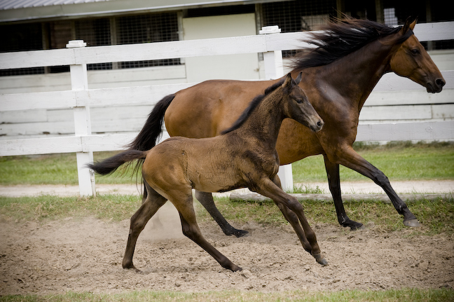 2011 Filly out of Fasta