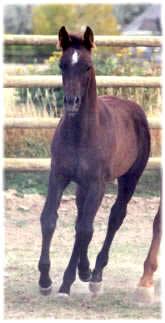 2001 filly Kavi