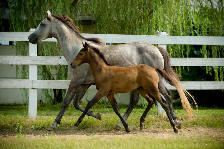 Stiletto *Ps* daughter Arisha with her 2010 filly by Imminence