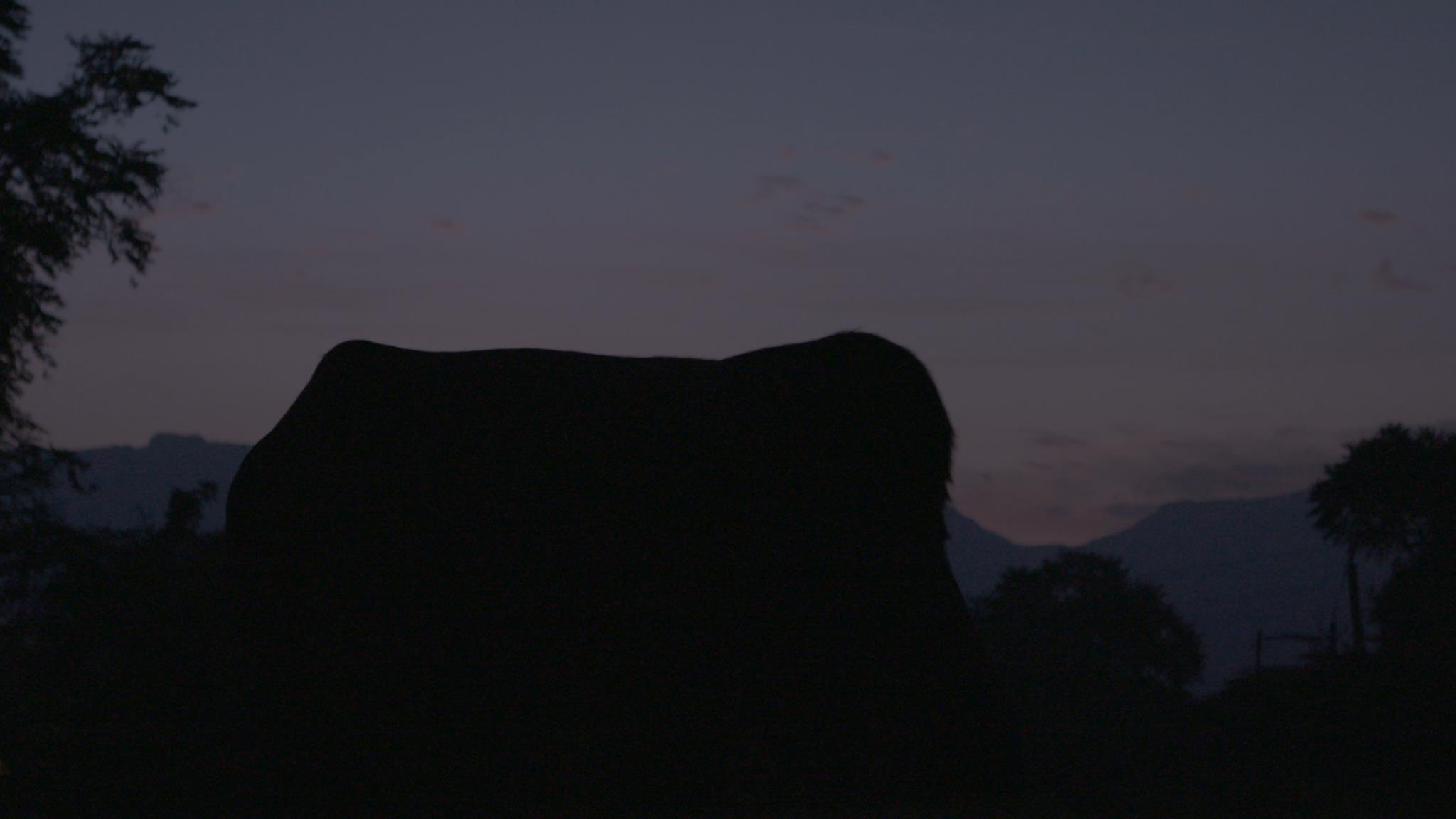 Cow Range.jpg
