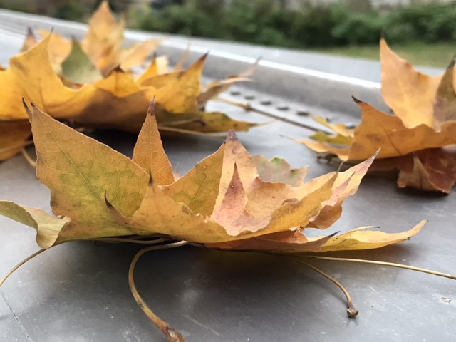 Leaf wreath 2.jpg