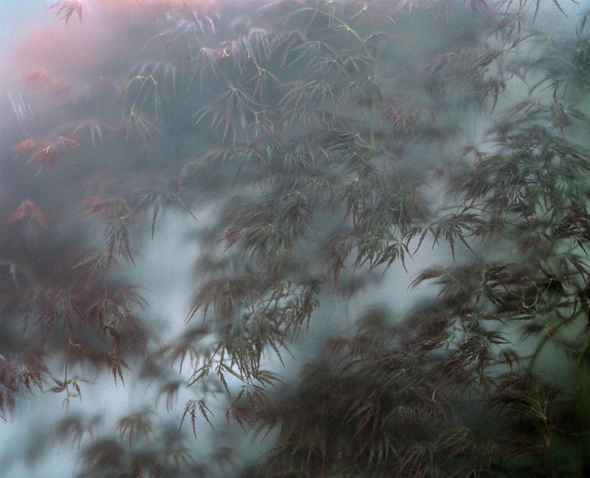 Sendagaya Frost, 2015